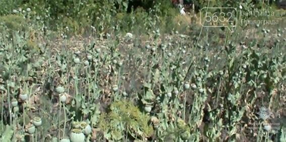 В Петропавлівському районі чоловік на городі вирощував понад 400 кущів опійного маку, фото-1