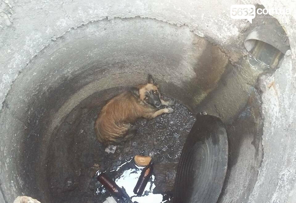 У Павлограді собака провалилася в двометровий люк, фото-1