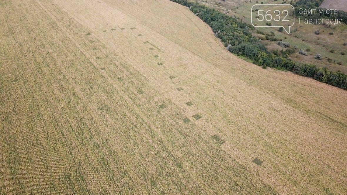 Аеророзвідка поліції виявила величезні поля з канабісом, фото-1