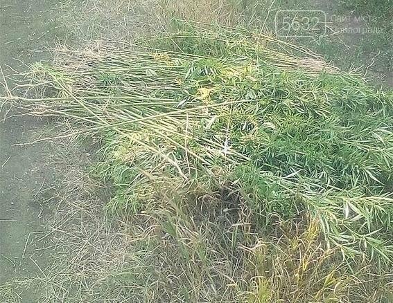 На Юр'ївщині спалили 500 кущів коноплі, фото-2