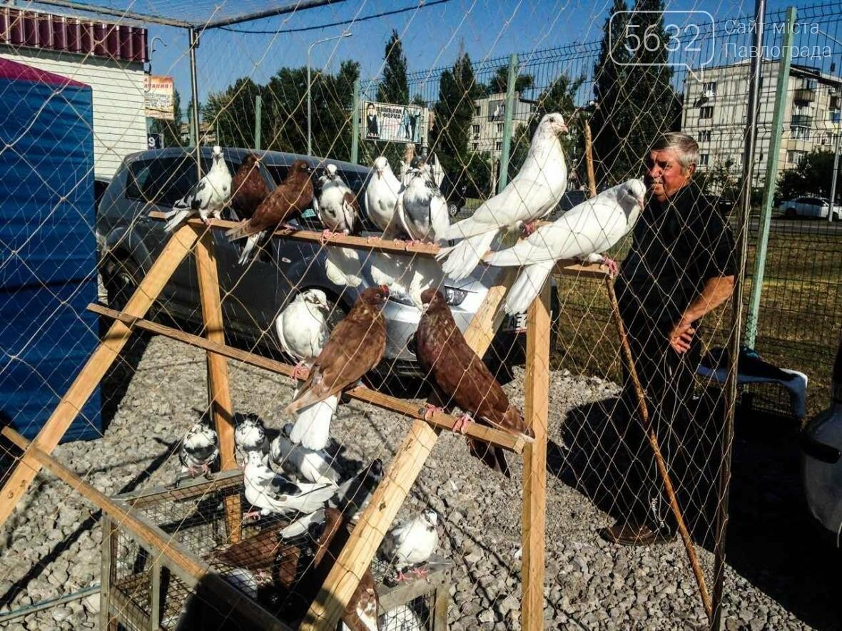 В Павлоград привезли голубей и редких декоративных птиц, фото-11