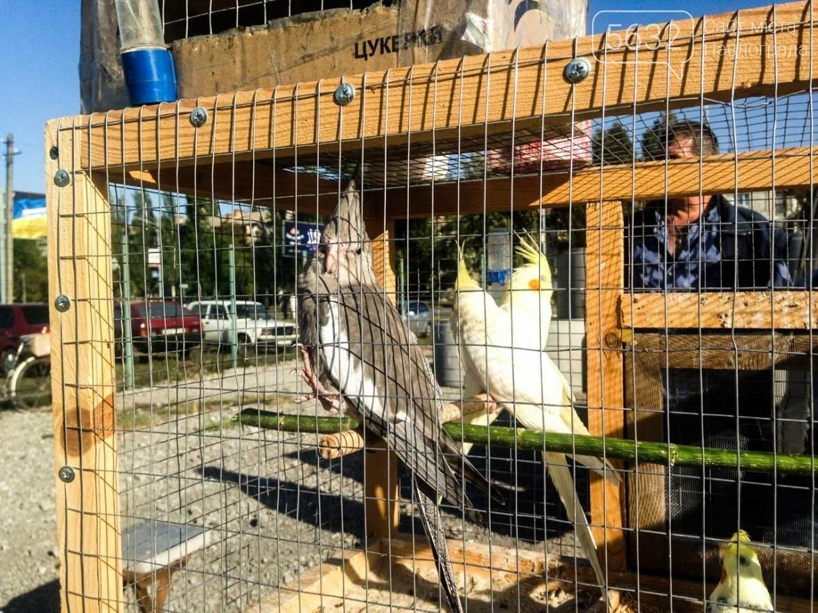 В Павлоград привезли голубей и редких декоративных птиц, фото-14
