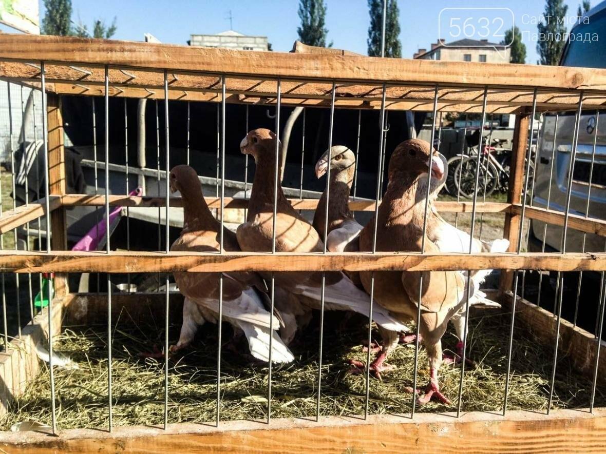 В Павлоград привезли голубей и редких декоративных птиц, фото-13