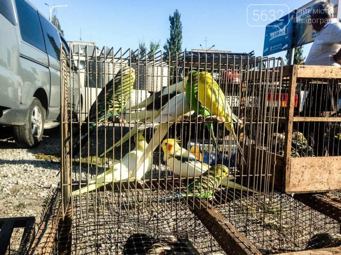 В Павлоград привезли голубей и редких декоративных птиц, фото-5