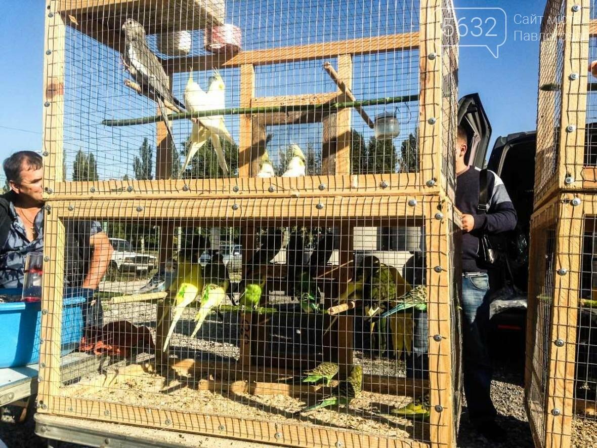 В Павлоград привезли голубей и редких декоративных птиц, фото-6