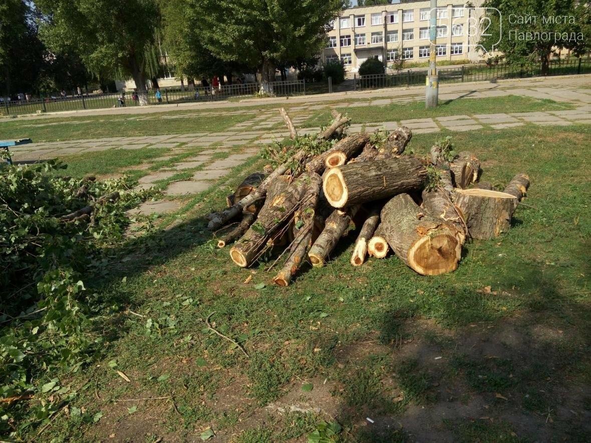 Жители Павлограда жалуются на варварскую обрезку деревьев, фото-7