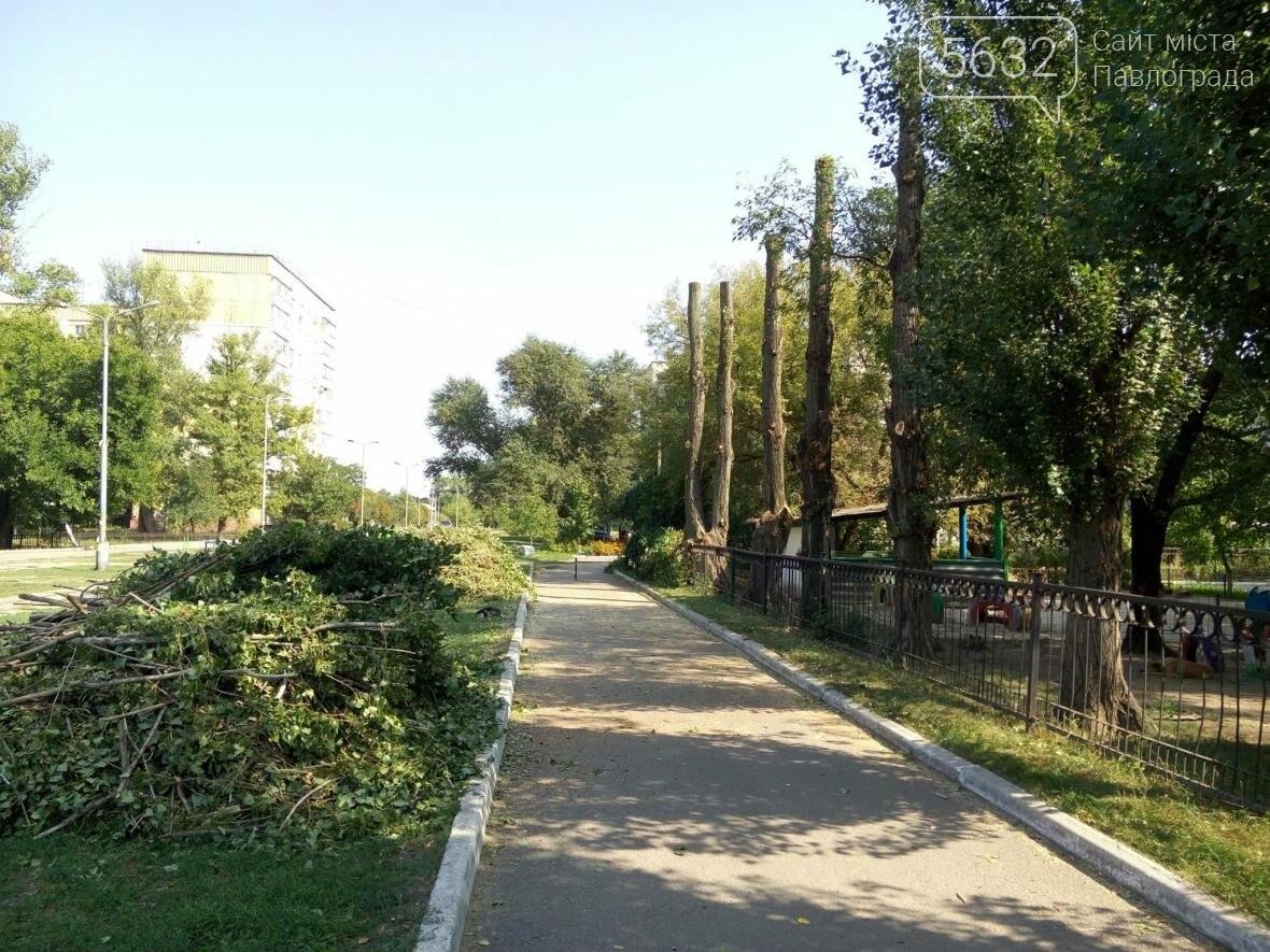 Жители Павлограда жалуются на варварскую обрезку деревьев, фото-4