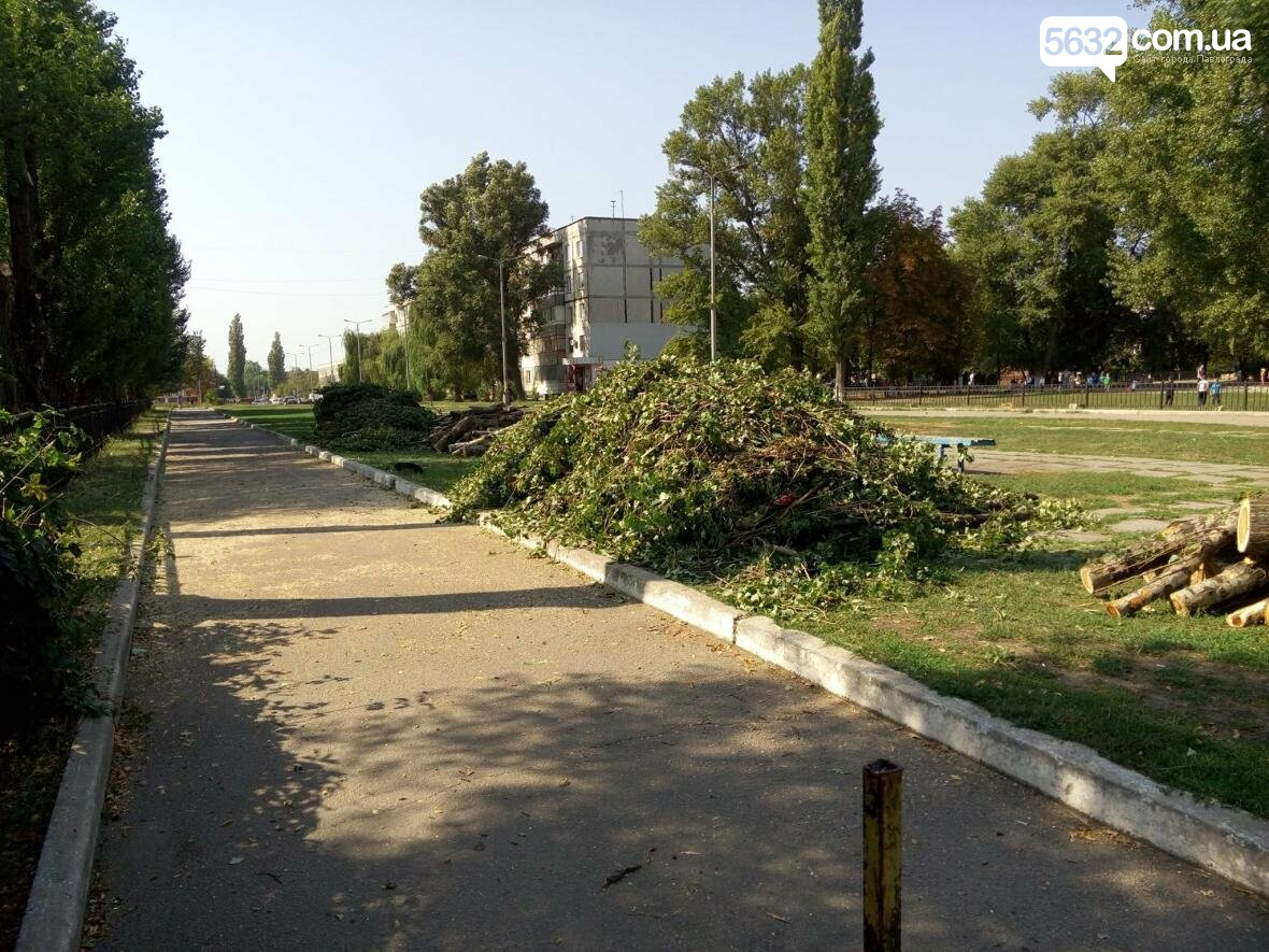 Жители Павлограда жалуются на варварскую обрезку деревьев, фото-8