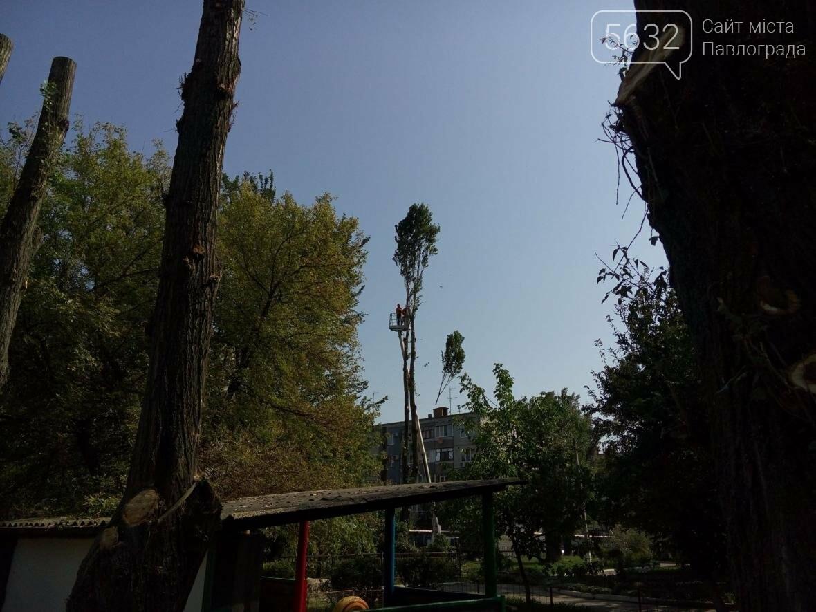 Жители Павлограда жалуются на варварскую обрезку деревьев, фото-1