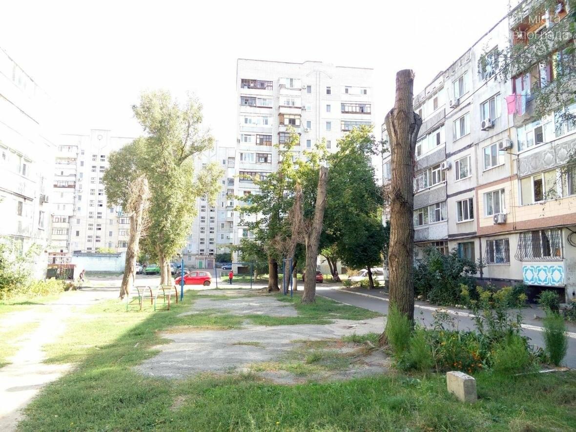 Жители Павлограда жалуются на варварскую обрезку деревьев, фото-5