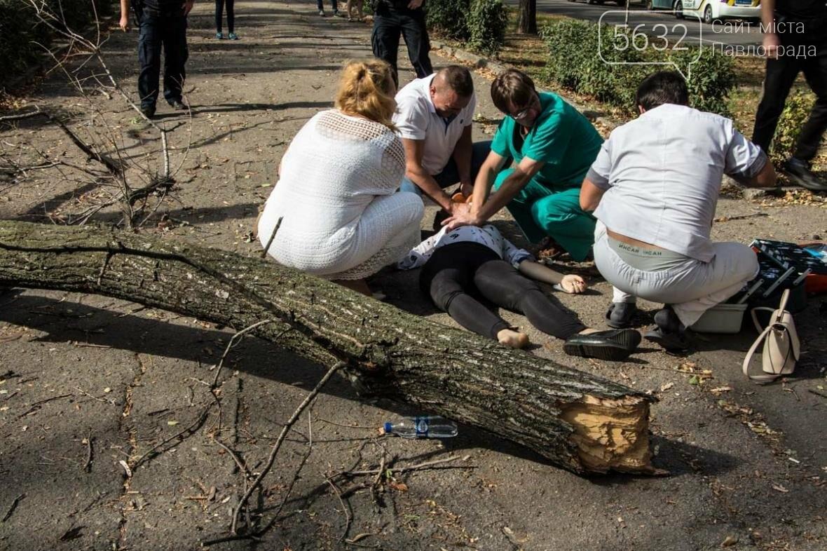 В Днепре упавшая ветка сухого дерева убила студентку, фото-1