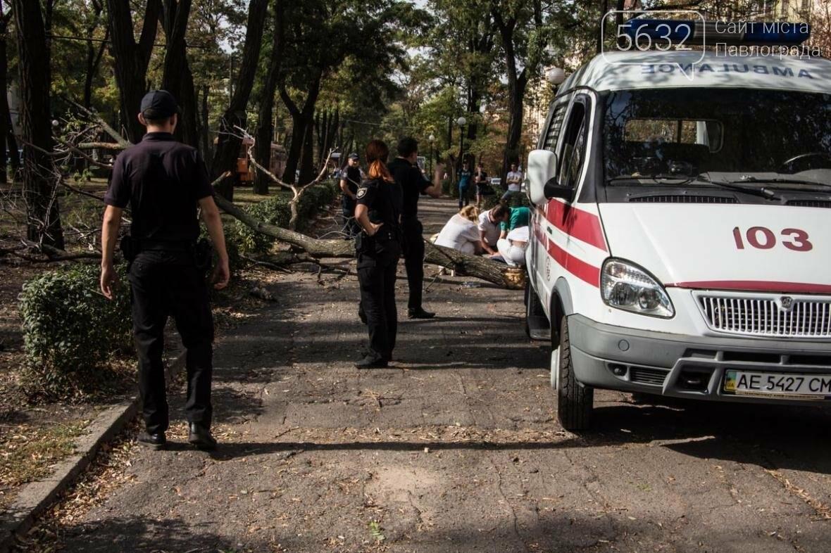 В Днепре упавшая ветка сухого дерева убила студентку, фото-5