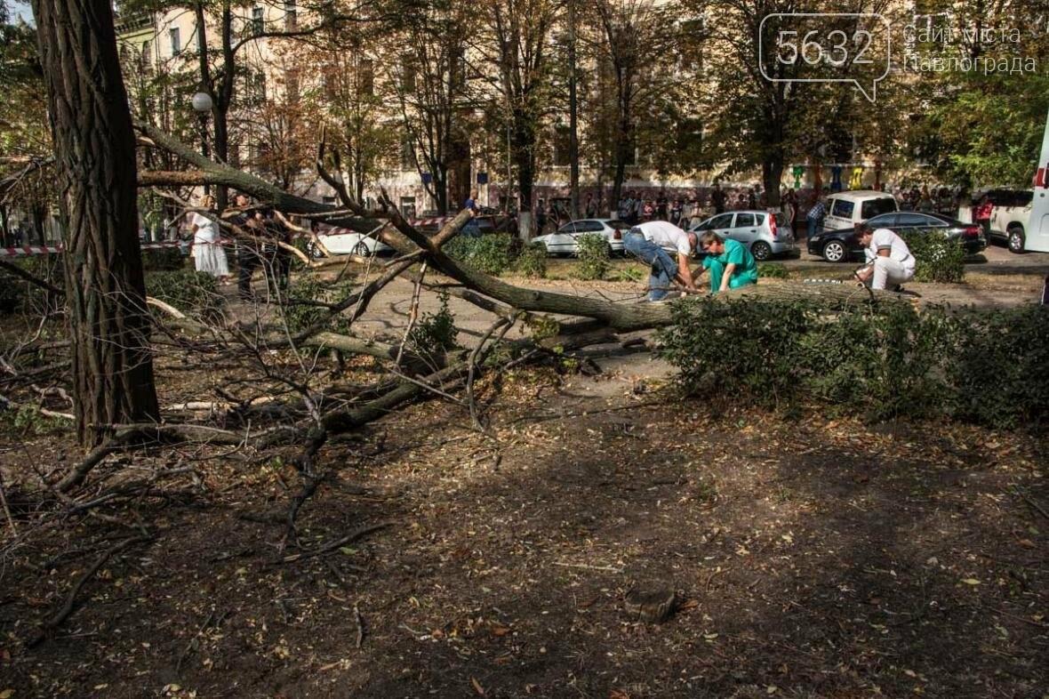 В Днепре упавшая ветка сухого дерева убила студентку, фото-3