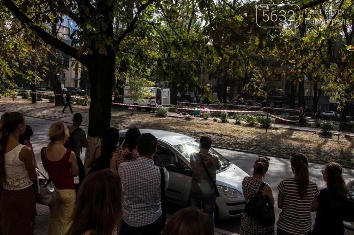 В Днепре упавшая ветка сухого дерева убила студентку, фото-4