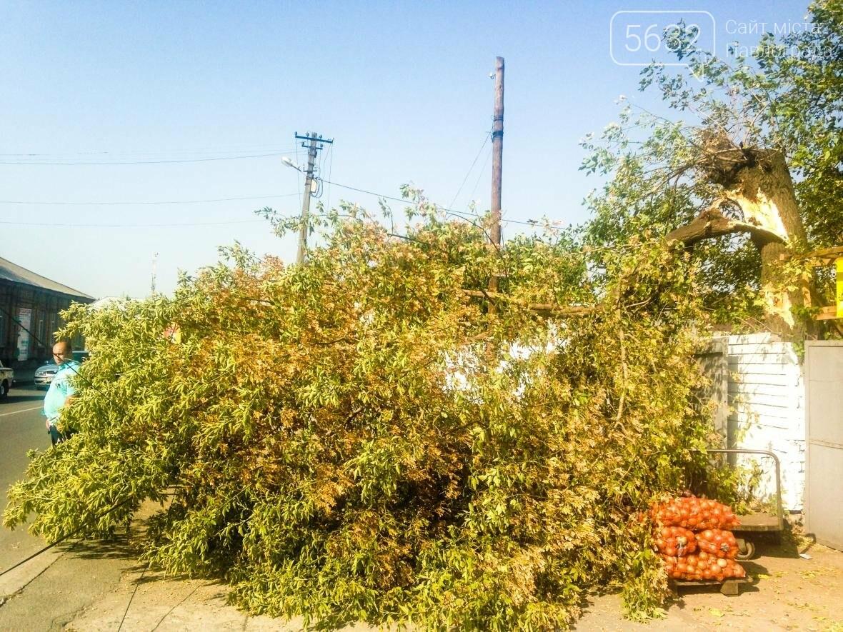 В центре Павлограда дерево упало на телекоммуникационные кабеля , фото-1
