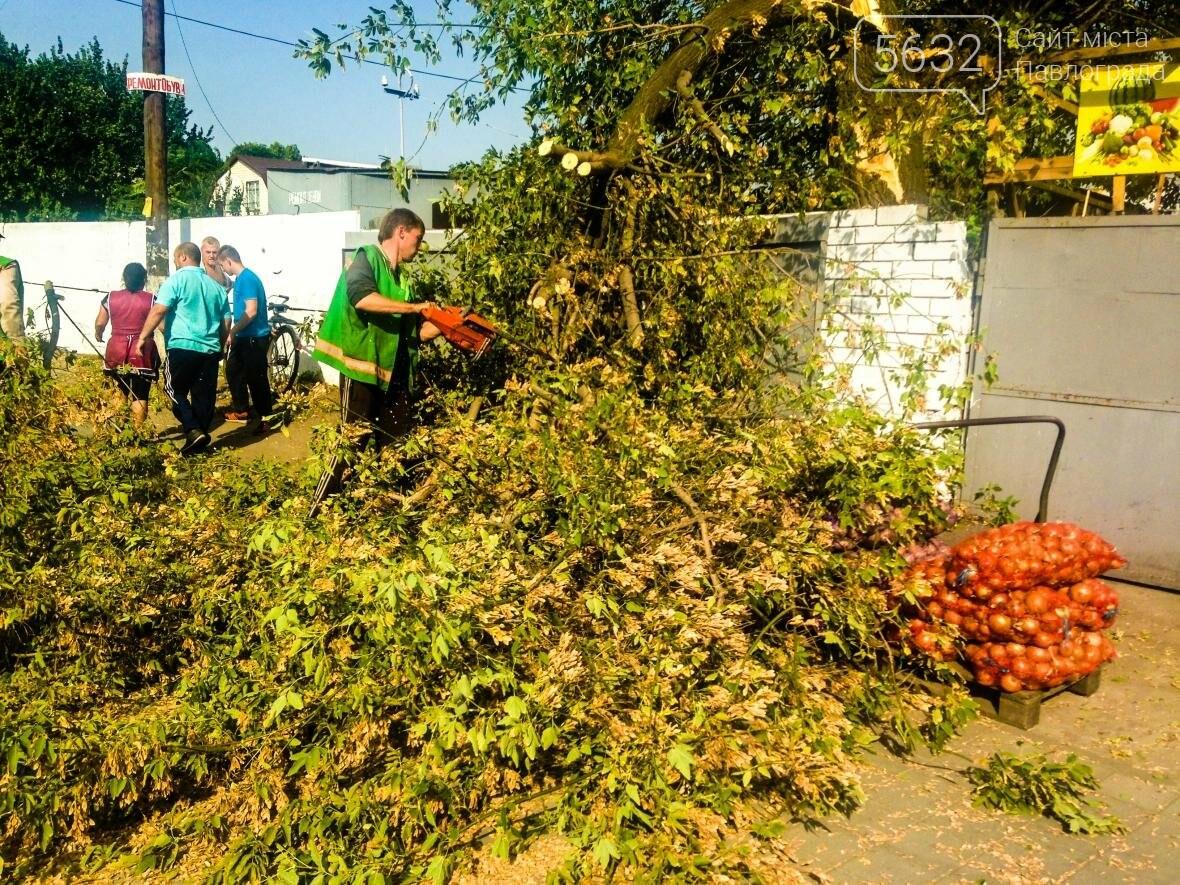 В центре Павлограда дерево упало на телекоммуникационные кабеля , фото-3