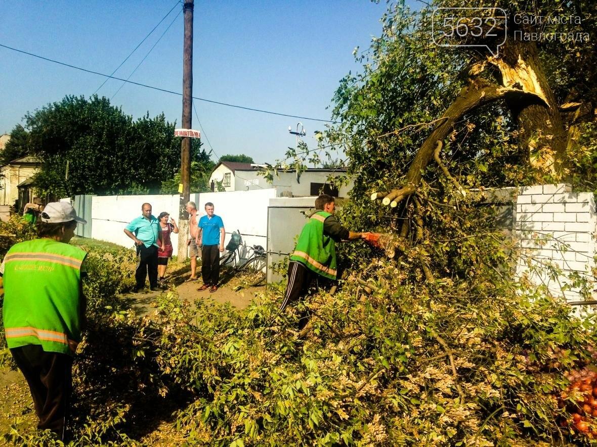 В центре Павлограда дерево упало на телекоммуникационные кабеля , фото-2