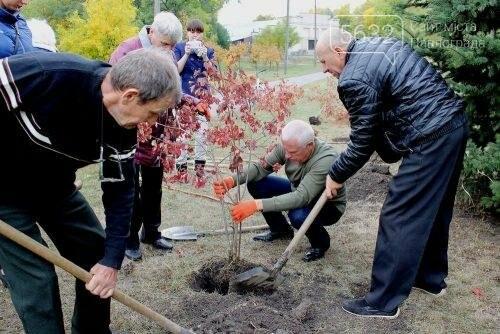 Павлоградцы высадили на Аллее героев рябины и калины, фото-1