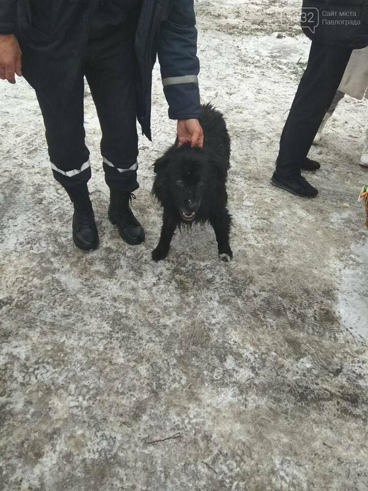 Павлоградець разом із собакою провалився під кригу, фото-2