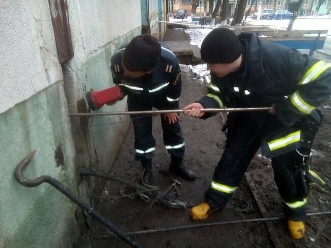 В Терновке спасатели вытащили застрявшую между домами собаку, фото-1