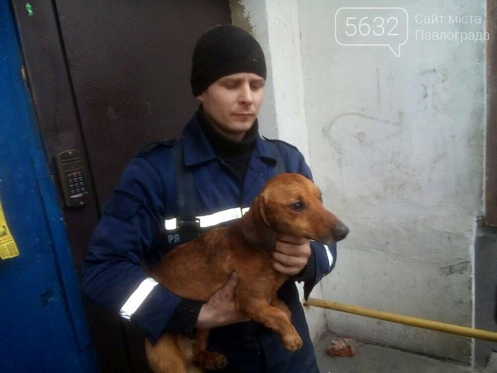В Терновке спасатели вытащили застрявшую между домами собаку, фото-3