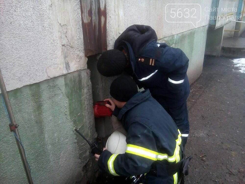 В Терновке спасатели вытащили застрявшую между домами собаку, фото-4
