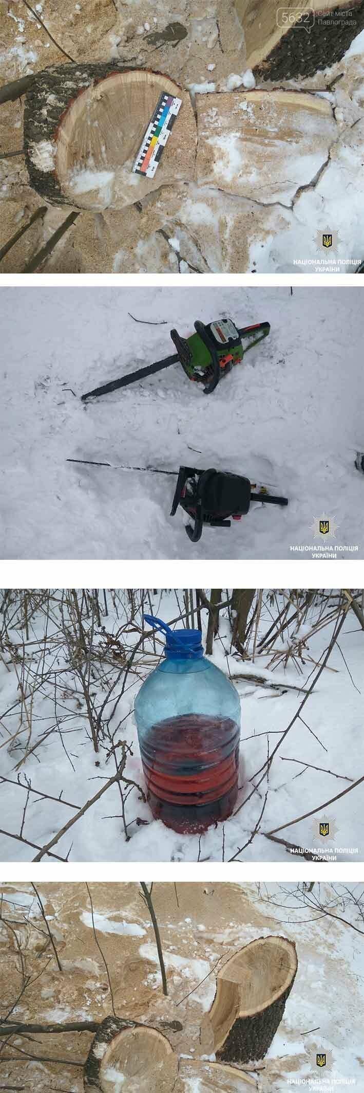 Поліцейські Павлограда затримали чоловіків, які випилювали дерева, фото-1