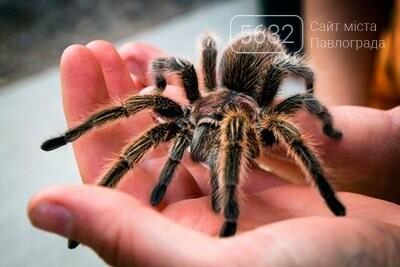 Будьте обережні: на Дніпропетровщині зареєстрували декілька видів отруйних павуків, фото-1