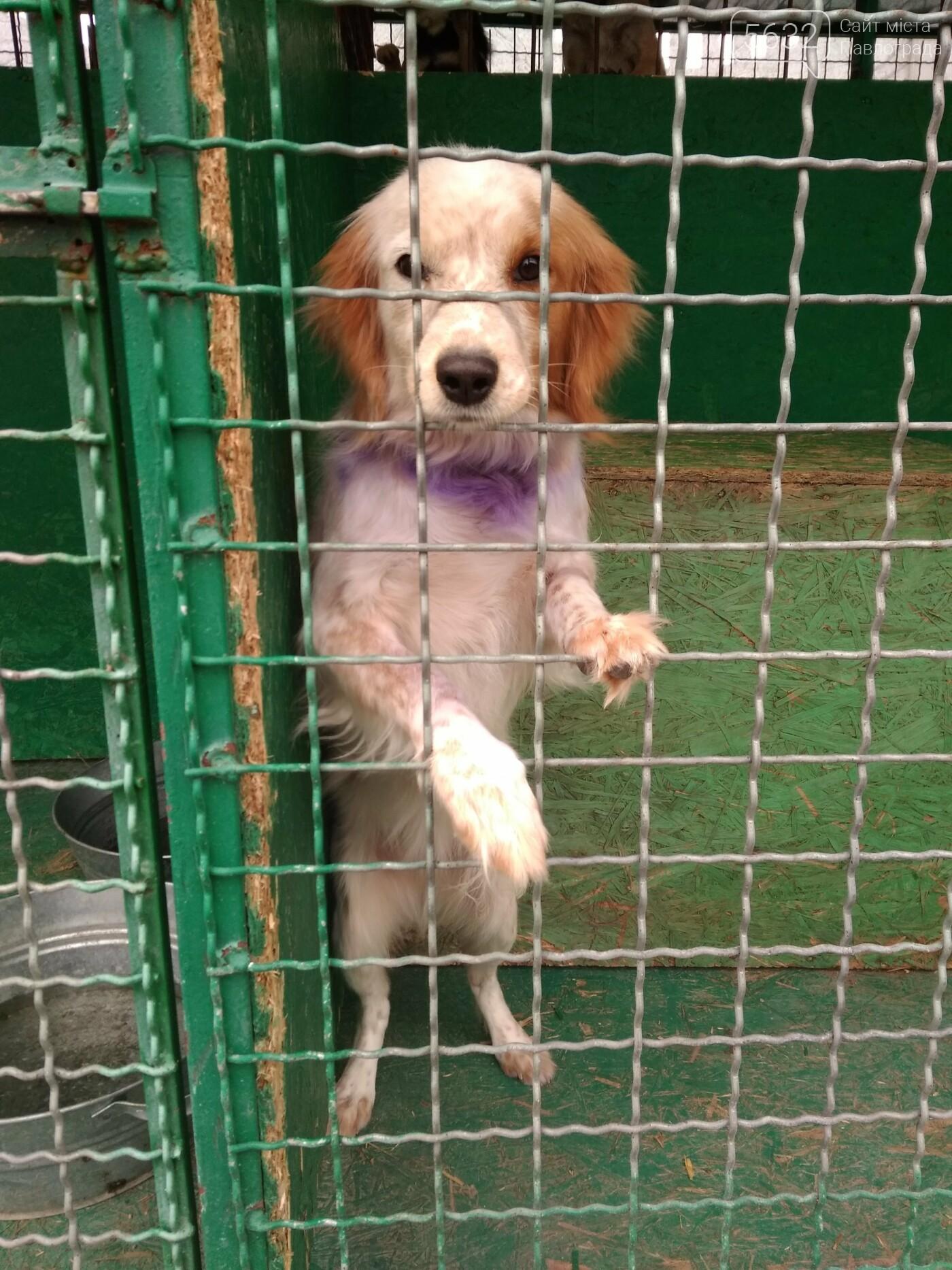 Учні павлоградської школи відвідали собачій притулок, фото-2