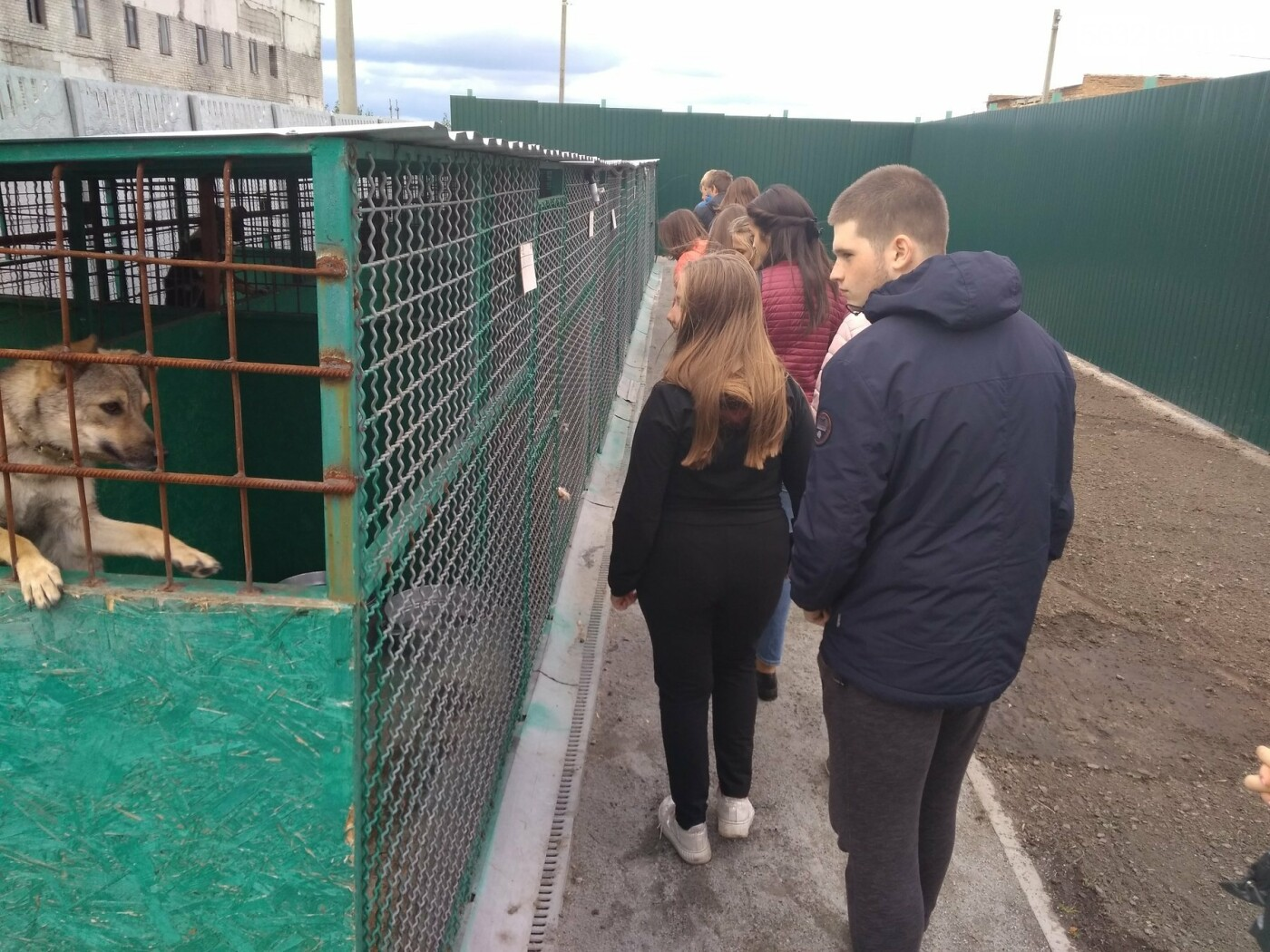Учні павлоградської школи відвідали собачій притулок, фото-3