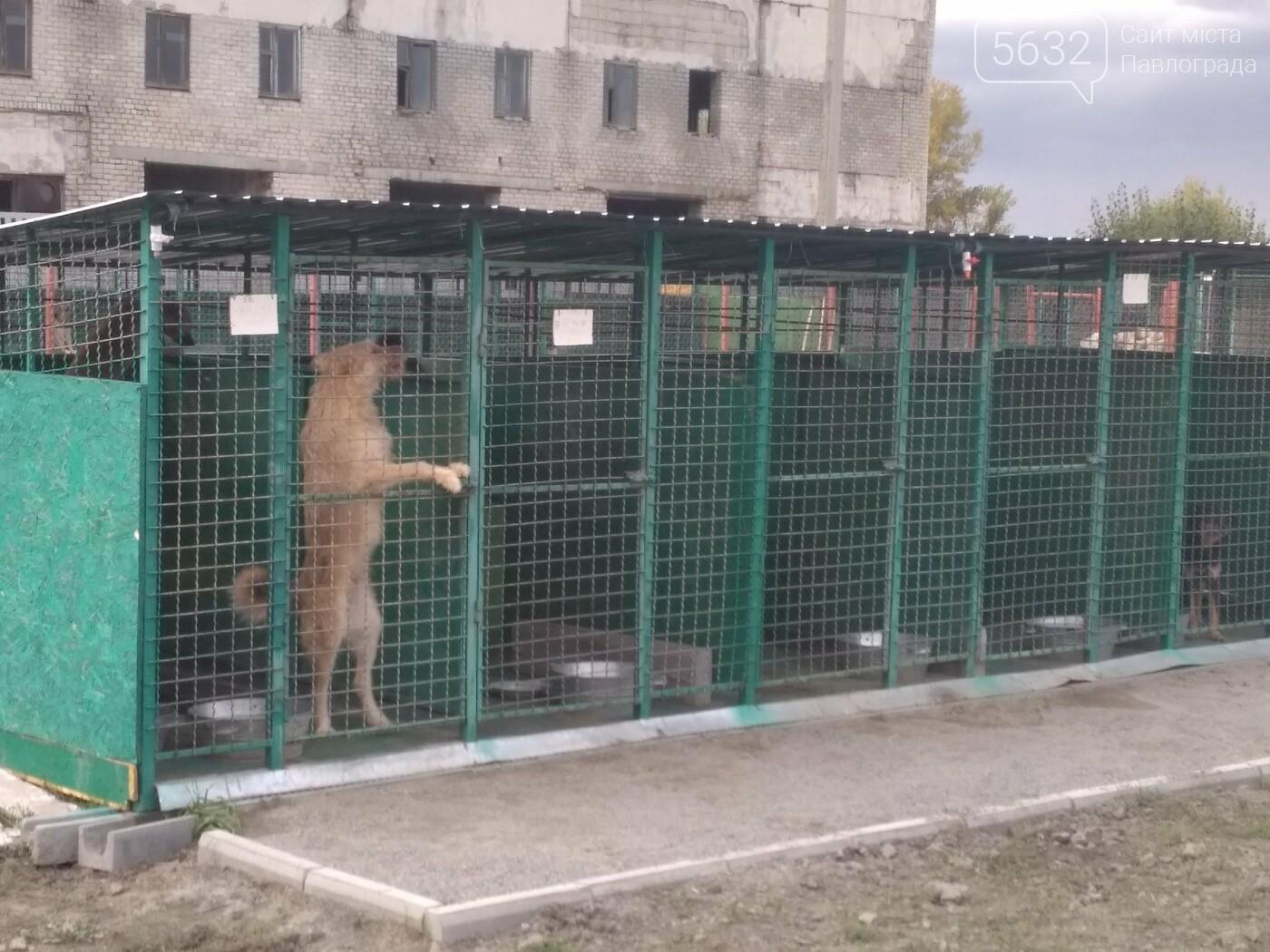 Учні павлоградської школи відвідали собачій притулок, фото-4
