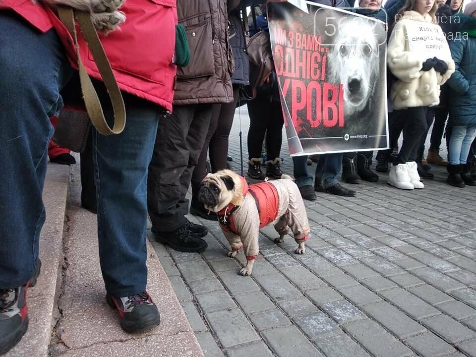 У Павлограді пройшов марш за права тварин, фото-1