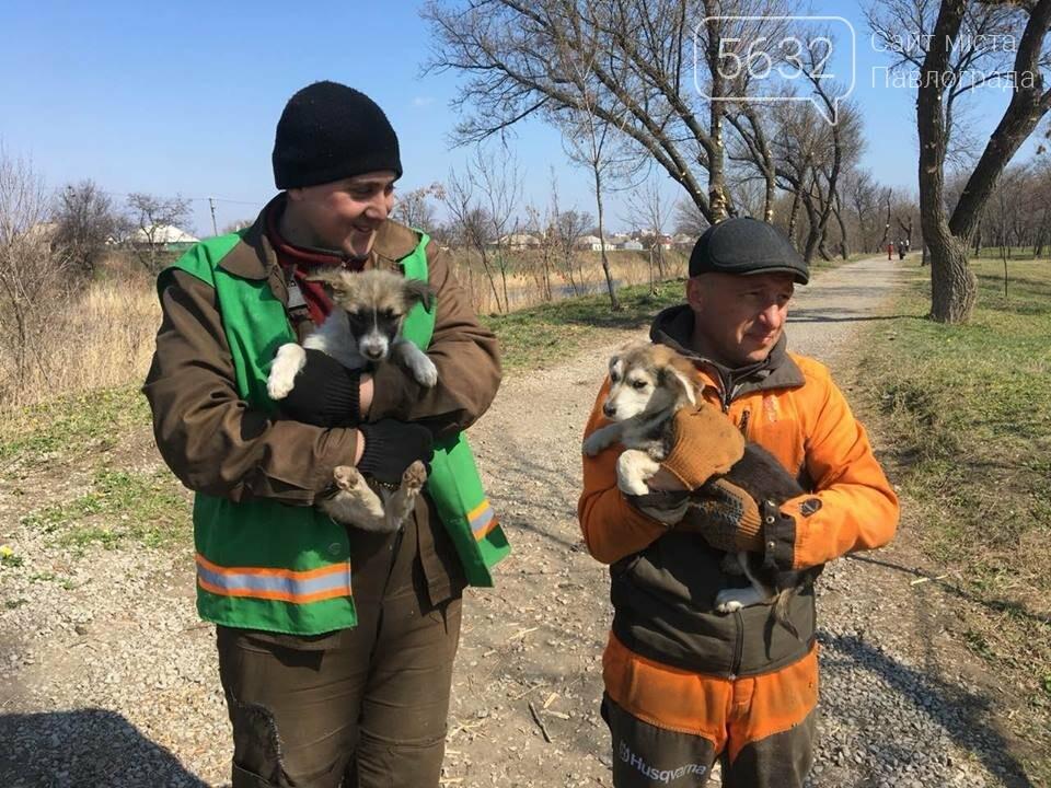 У Павлограді врятували двох цуценят, які жили в трубі, фото-4