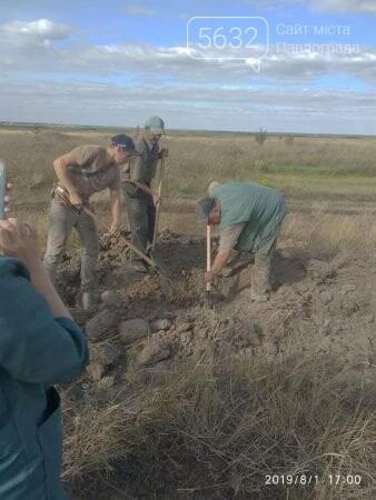 Трупы инфицированных свиней найдены на Днепропетровщине, фото-1