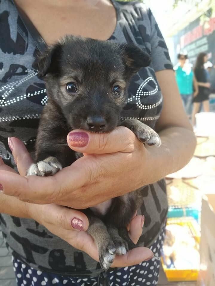 Сегодня Всемирный день бездомных животных, фото-4