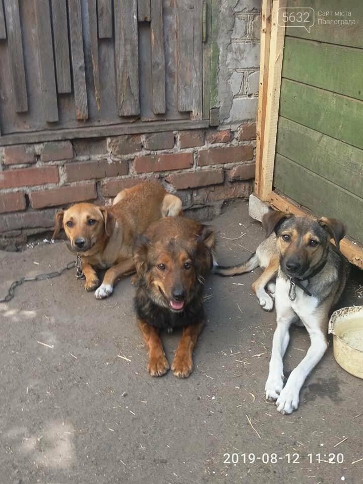Сегодня Всемирный день бездомных животных, фото-5
