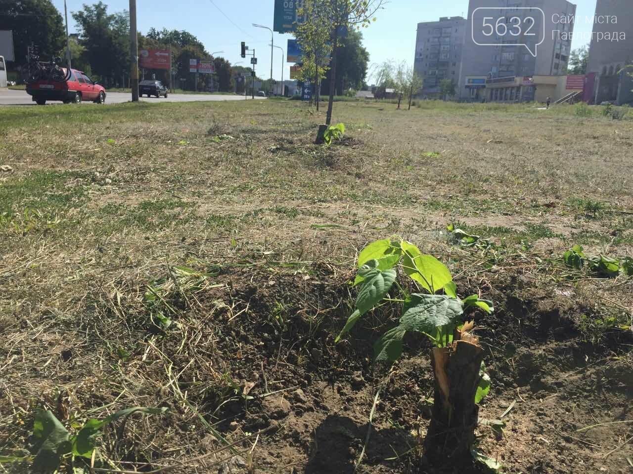 В Павлограде вдоль улицы Днепровской срубили молодые деревья, фото-3