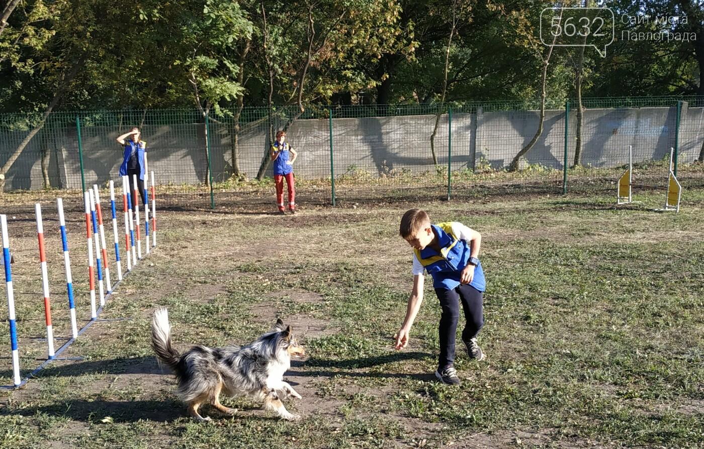 В Павлограде открылась площадка для спорта с собаками, фото-9