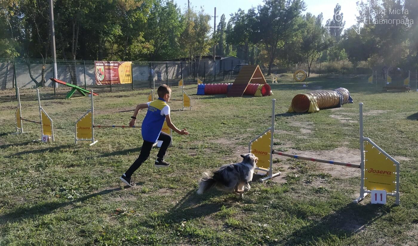 В Павлограде открылась площадка для спорта с собаками, фото-10
