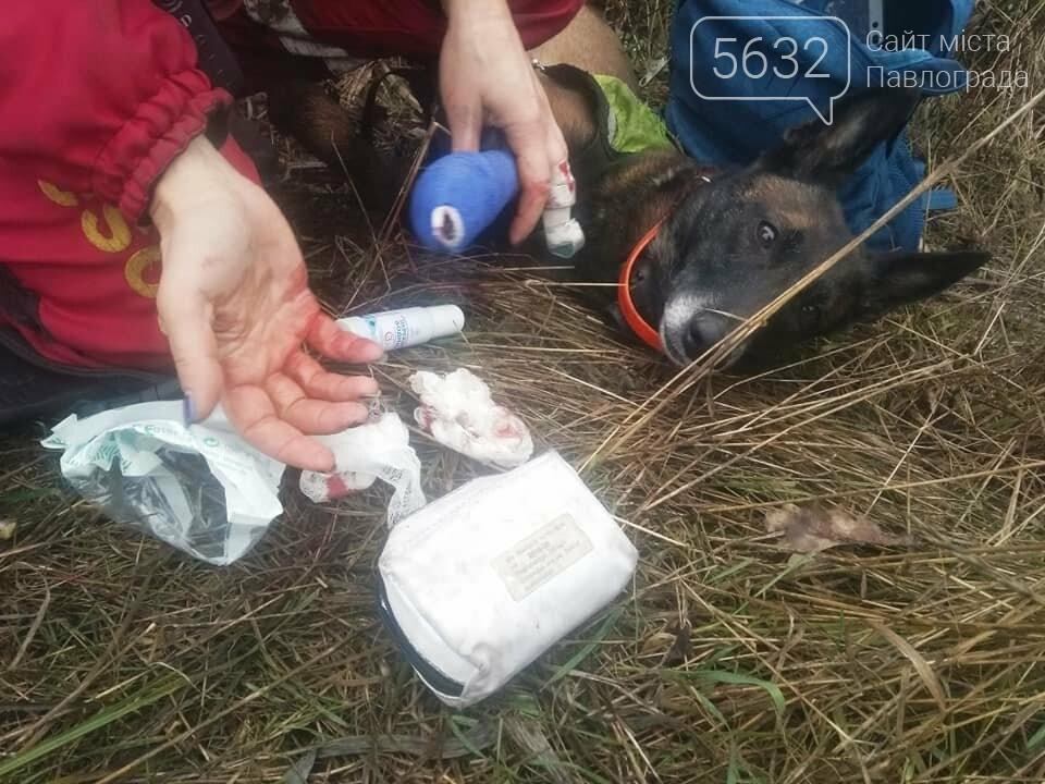 Собаки, кинологи и волонтеры падают с ног: как под Днепром ищут Артема Агеева, пропавшего 2 недели назад (Фото)