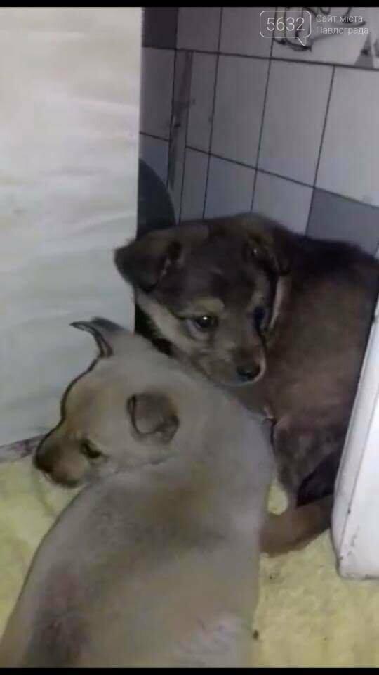 В Павлограде щенка освободили из ловушки, фото-2