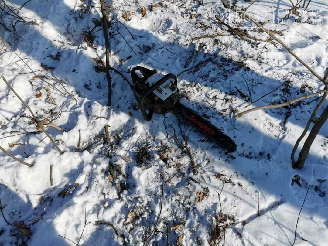 Житель Юрьевки незаконно спилил 3 дерева, фото-3