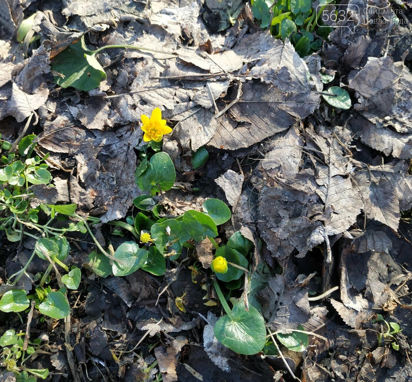 Вторая половина февраля порадует павлоградцев весенним теплом, фото-2