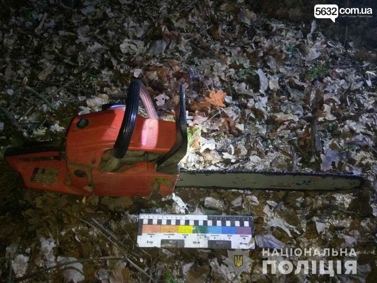Ещё двух «чёрных лесорубов» задержали на Павлоградщине, фото-2