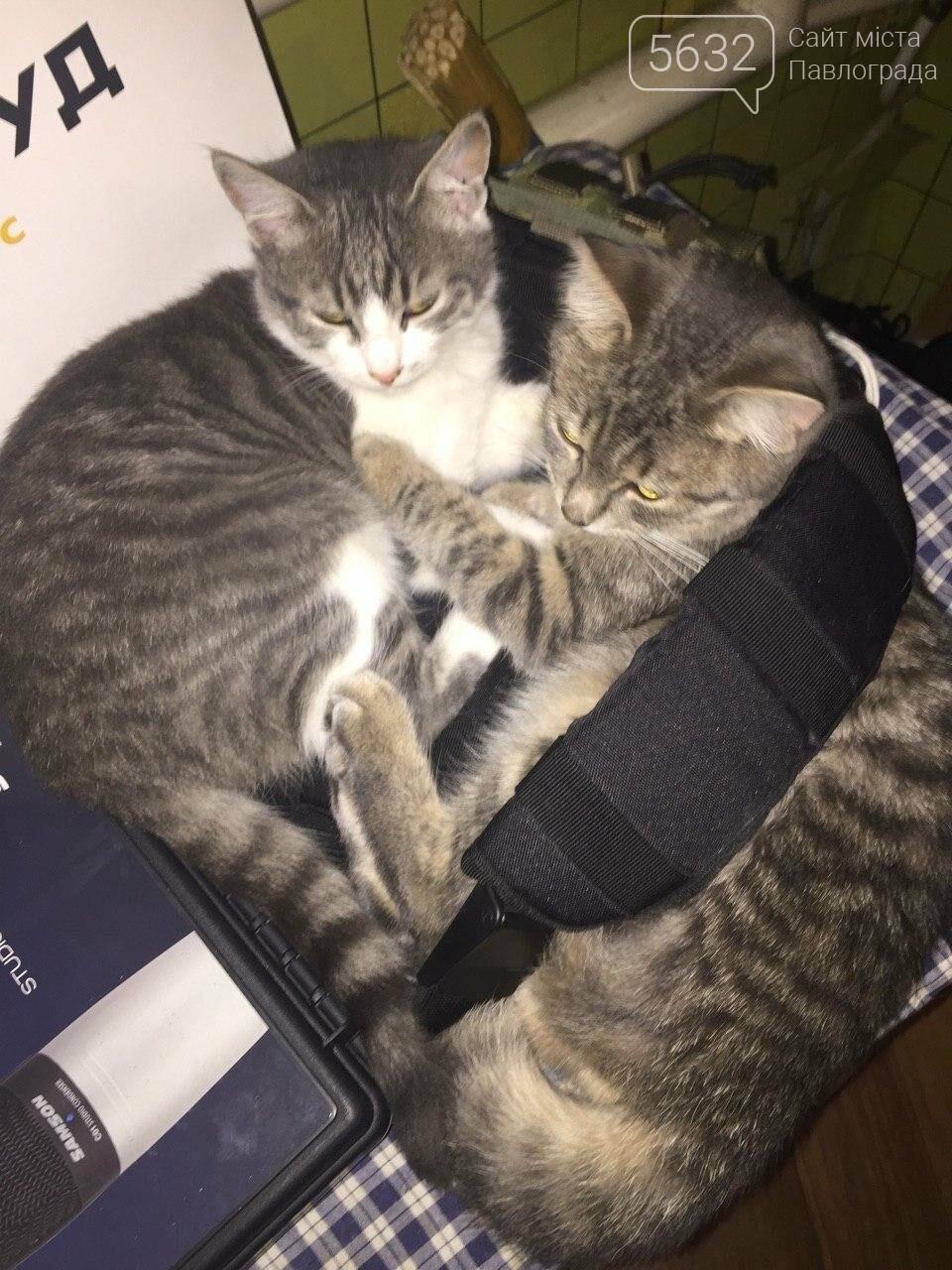 Завтра Всемирный день кошек! А ты празднуешь? , фото-4