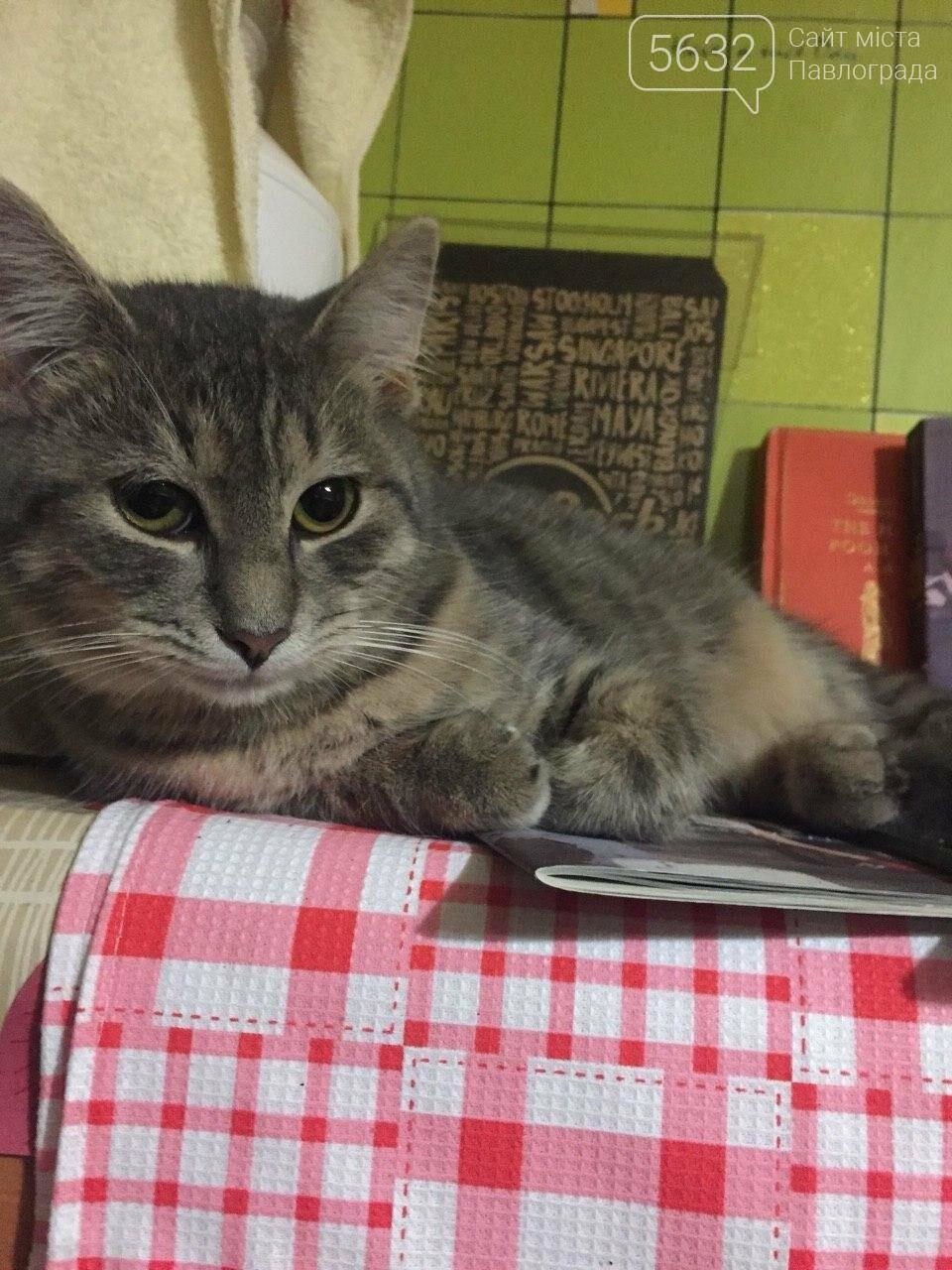 Завтра Всемирный день кошек! А ты празднуешь? , фото-2