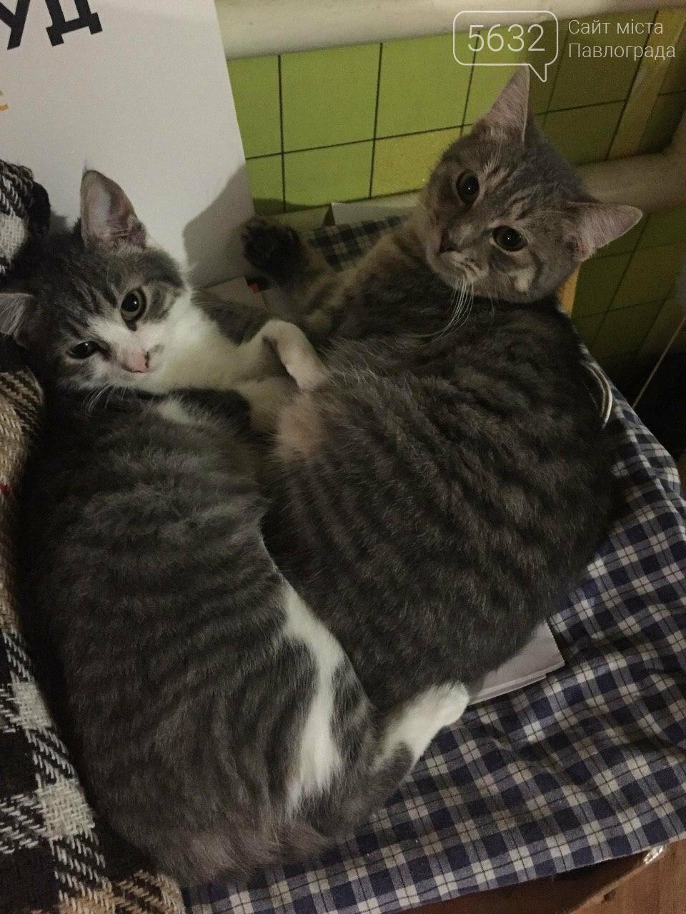 Завтра Всемирный день кошек! А ты празднуешь? , фото-5