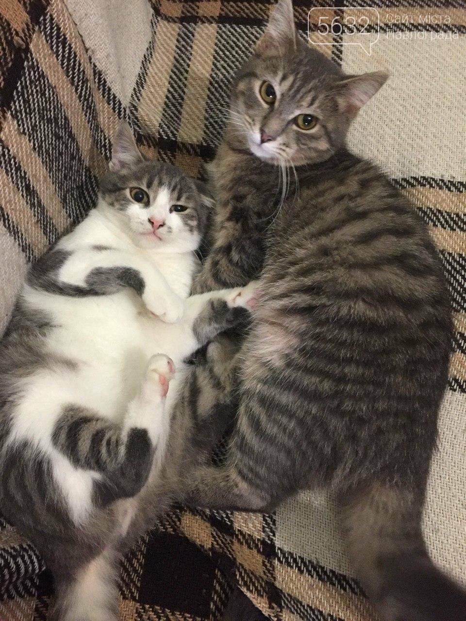 Завтра Всемирный день кошек! А ты празднуешь? , фото-6