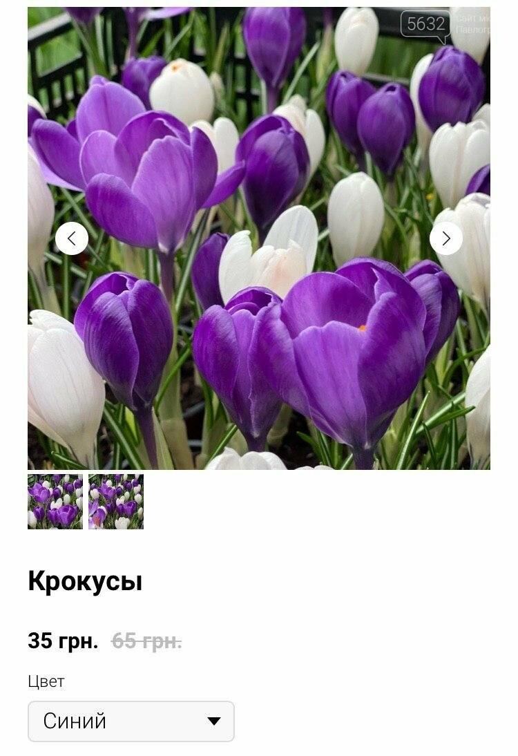 """""""Покупают всё!"""": какова стоимость одного тюльпана оптом? , фото-5"""
