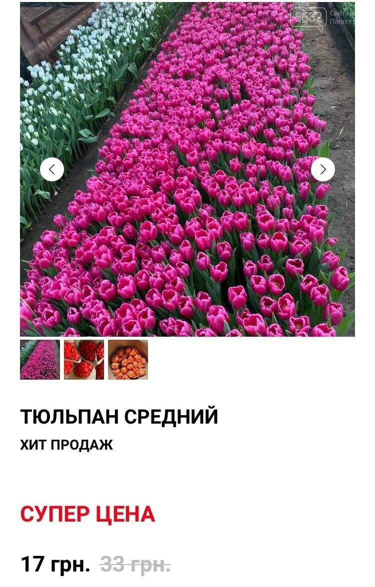 """""""Покупают всё!"""": какова стоимость одного тюльпана оптом? , фото-6"""